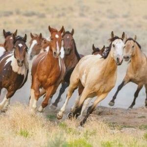 Horse & Livestock